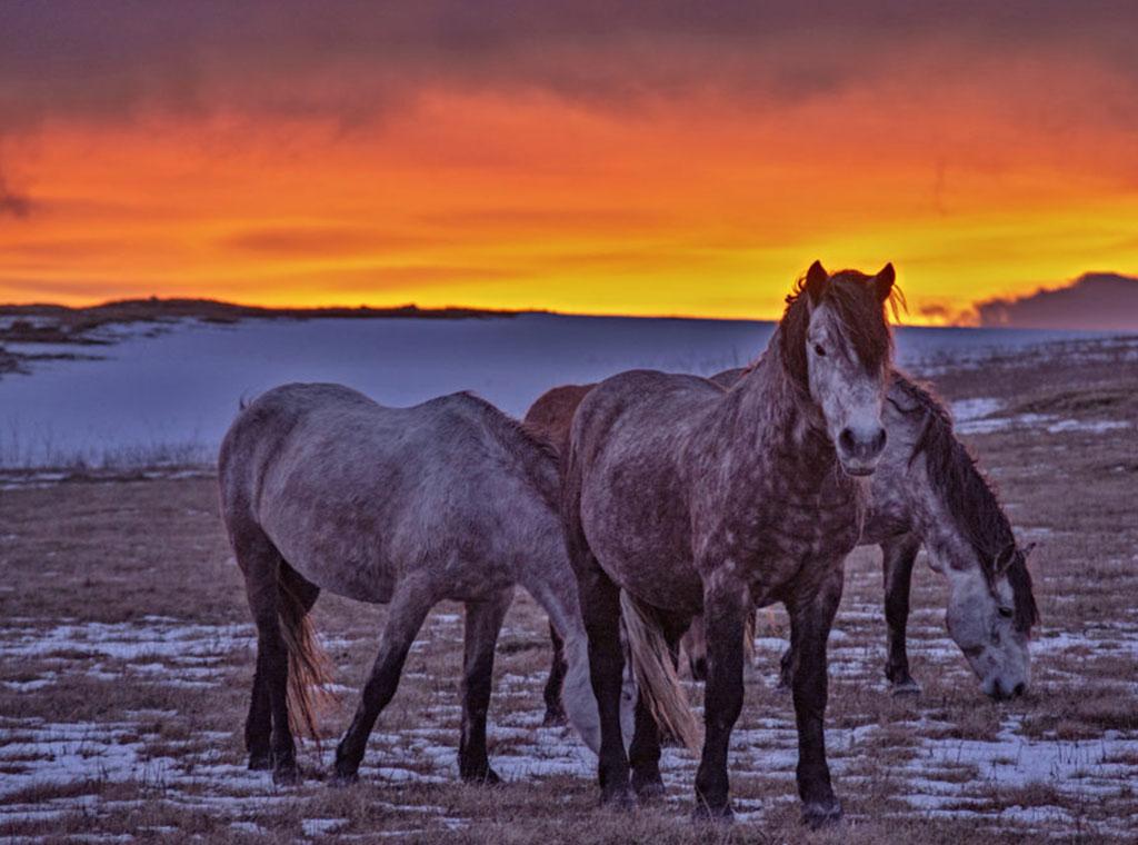 upoznavanje s konjima